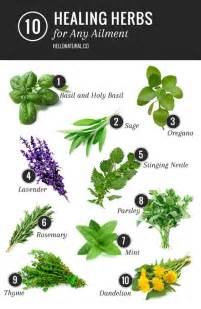 list 10 o more medicinal herbal plants ano picture 1