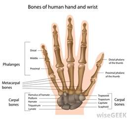 joint pain in wrist and thumbs picture 10