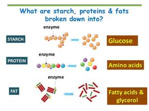 amino acids enzymes help blood flow picture 9