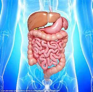 intestine bacteria and weight gain picture 3