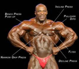 build chest muscle picture 7