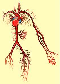 discovery of blood circulation picture 1
