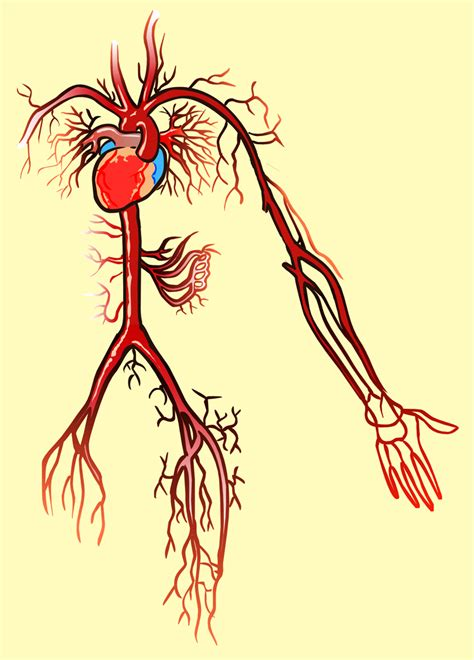 blood circulation discover picture 1