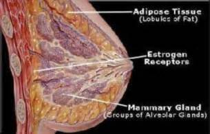 breast enhancement in 30 days picture 1