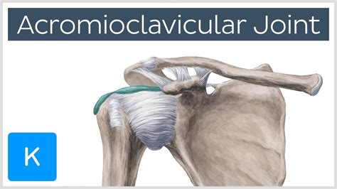 acromio-clavicular joint picture 9