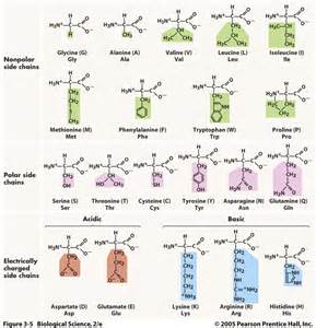best natural amino acids for erections picture 1