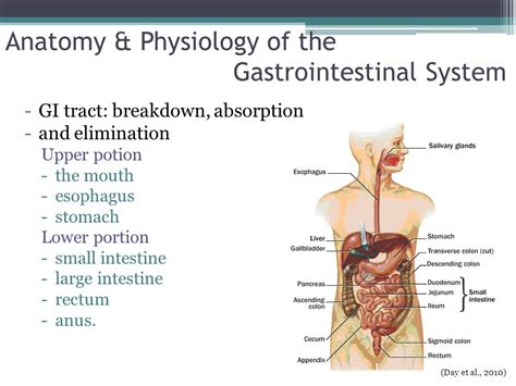 anatomy and physiology of gastrointestinal tract picture 4