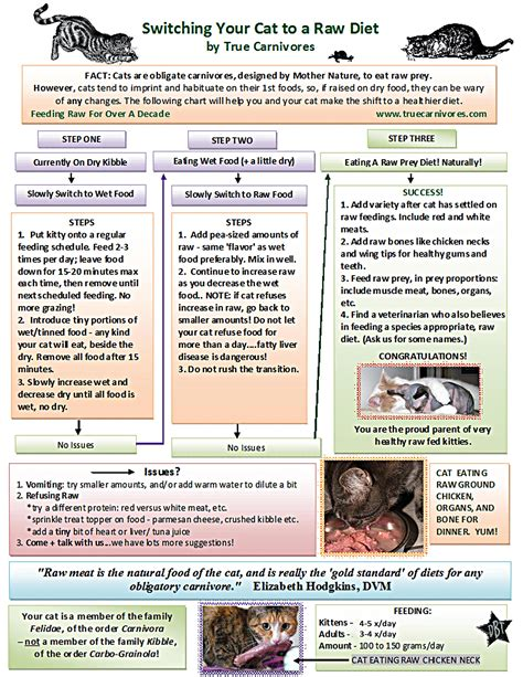 cat and raw diet and thyroid picture 7
