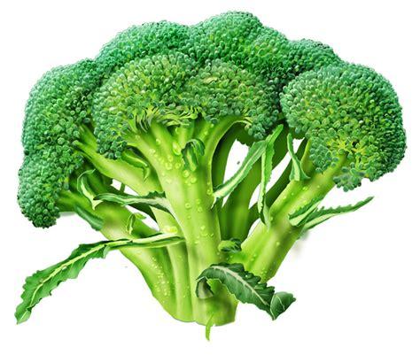 cabbage diet picture 5