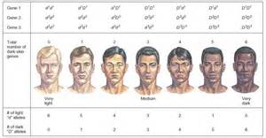 manipulating the skin color gene picture 2