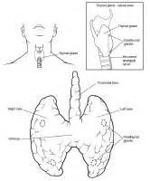 inferior pole thyroid picture 1