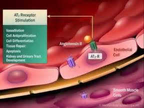 natural aldosterone blockers picture 3