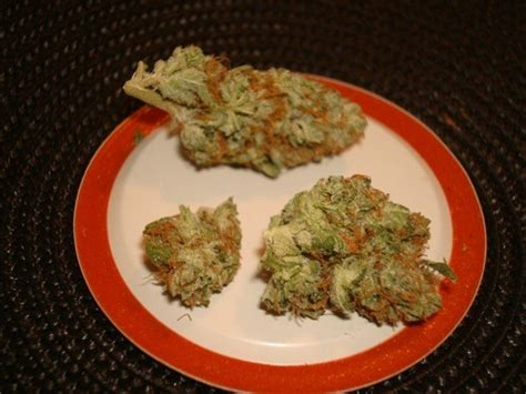 cannabis homeopathic remedy for sale picture 15