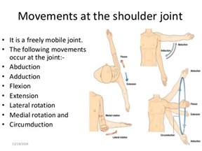 joint flexion rotation anatomy picture 5