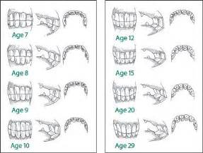 equine aging chart picture 6