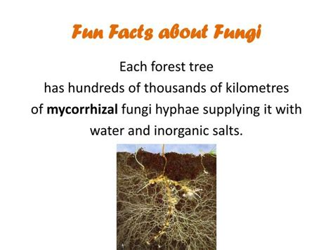 fun facts about fungi picture 11