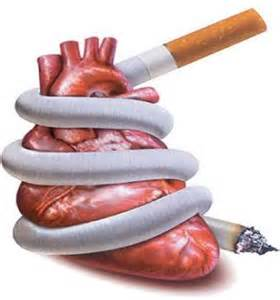 kidney and liver problems from smoking picture 7