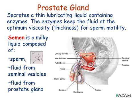 Prostate fluid seamen picture 2