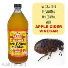 apple cider vinegar for feline herpes picture 10