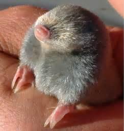 strange skin moles picture 6