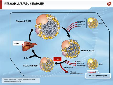 Systoms of high cholesterol picture 11