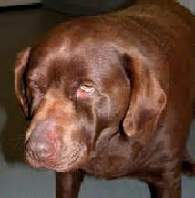 symptoms of canine thyroid problems picture 18