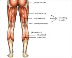 muscle 20pain picture 2