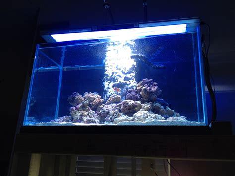 aquarium h picture 11