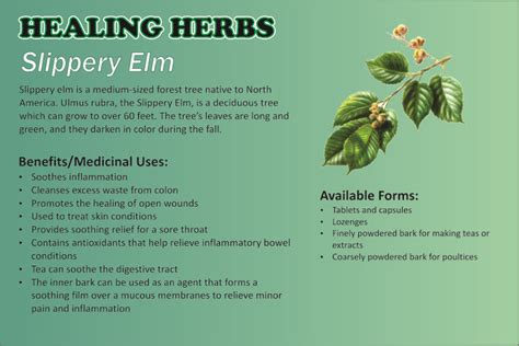slippery elm herbal remedy picture 2