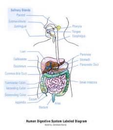 testosterone estrogen study picture 17