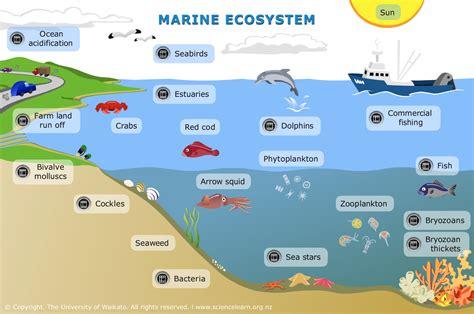 debris management planning picture 2