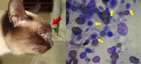 dog skin diseases picture 1