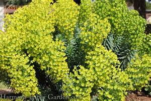 euphoric plants n america picture 5