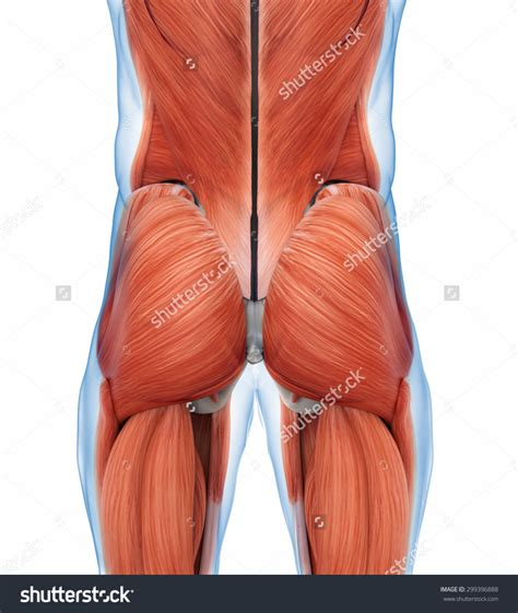 lower back muscle spasm picture 13