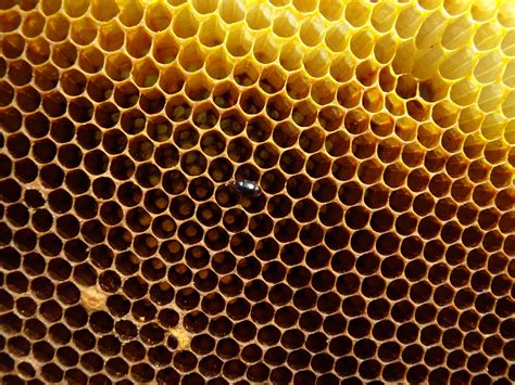 hive picture 6