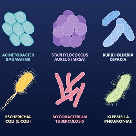 do bacterial infections heal on their own picture 13