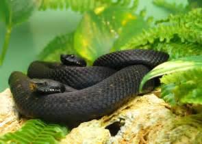 black mamba erectile picture 2