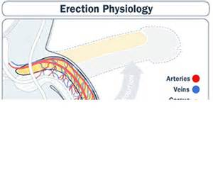 erectile disfunction causes and treatment picture 2