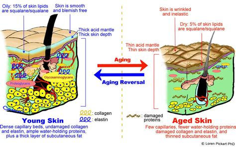 changes in skin picture 18