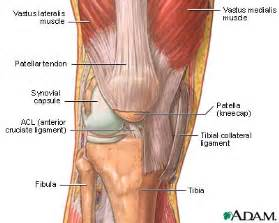 muscle joint pain legs picture 13