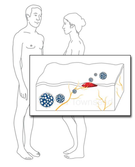 genital herpes transmission picture 2