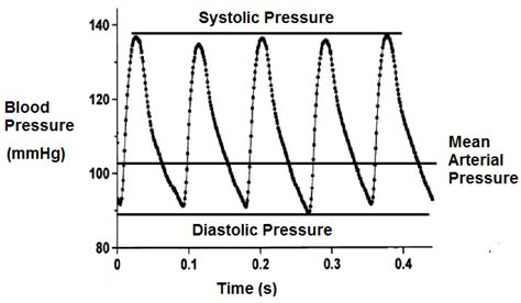 Arterial blood pressure picture 7