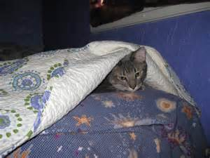 dangers of sleeping under the blankets picture 15