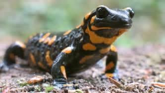amphibian skin spots picture 14