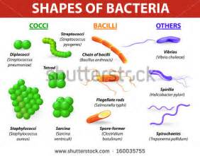 bacterial infections specified as groups picture 2