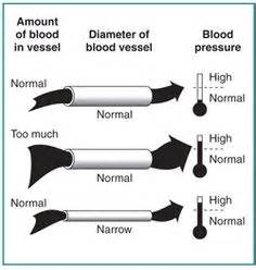 Kidneys and high blood pressure picture 15