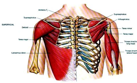 do torn attachments of the pectoralis muscle need picture 10