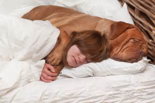 can dogs take nighttime sleep aid picture 3