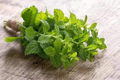 mint leaves for high blood pressure picture 3