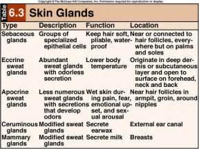 glandular allure of the skin picture 1